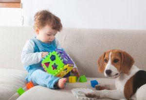 Beneficios de las terapias con los perros