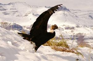 Día del Medio Ambiente: Parques, Reservas y Monumentos Naturales gratis