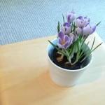 Plantas para tu departamento
