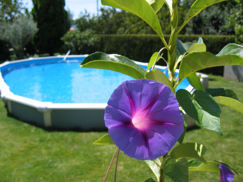 Ya viene temporada de piscinas belleza y alma for Piscinas jardin baratas