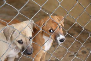 Mitos acerca de los animales de refugios
