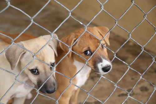 Animales en refugio