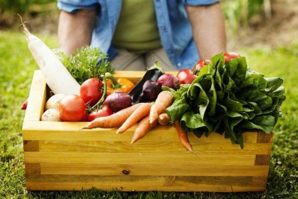 ¿A qué llamamos alimentos orgánicos?