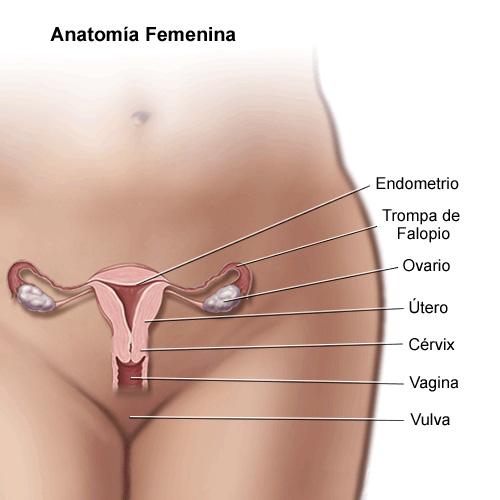 фотографии полавых органов женьщин