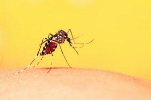 7 consejos para cuidar tu piel de los insectos