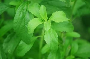 Propiedades de la stevia que quizá no conocías