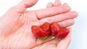 ¿Cómo mantener el corazón sano a través de la alimentación?