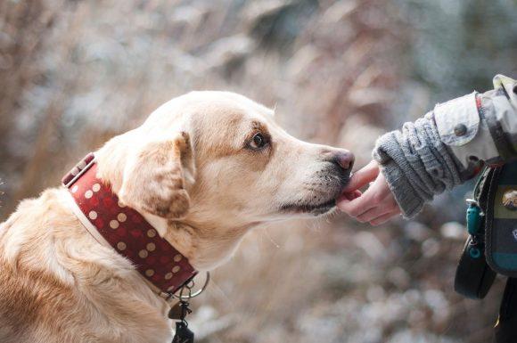 ¿Le hablas a tu perro?