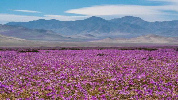 Chile al natural